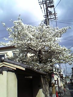 07-04-03_14-34.jpg